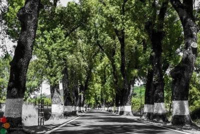 Camino a Castelo de Vide